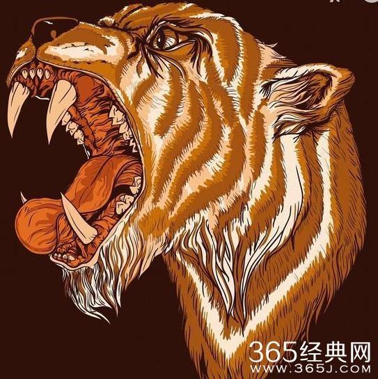 生肖虎这是我见过的最厉害的大运