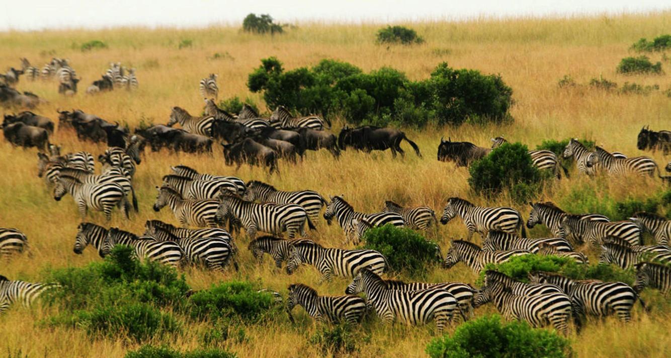 去非洲看动物迁移还是去草原策马奔腾 暑期你有啥玩法