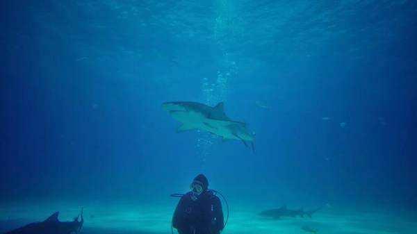 李光洁参与鲨鱼公益广告拍摄 呼吁保护海洋生态