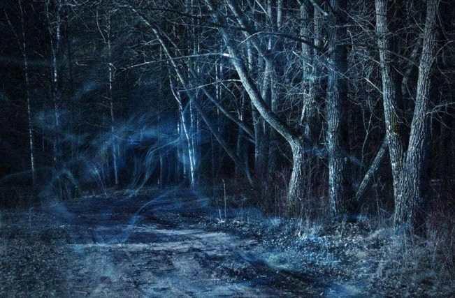 林中的小孩
