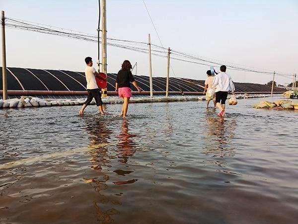 寿光遭水灾,北京冬季菜价要发烧