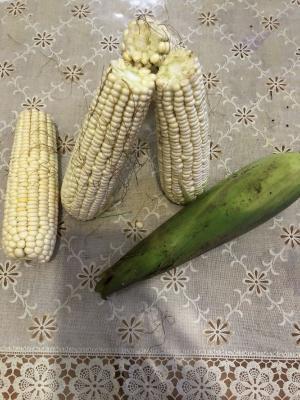 金丹科技拟投资5000万元设立全资子公司 种植高淀粉含量玉米