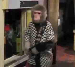 猴星人服务员!超赞