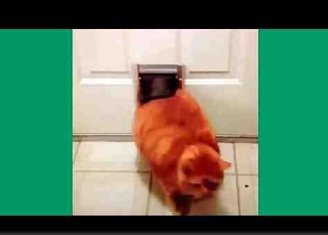2015最新最好猫星人搞笑视频集合