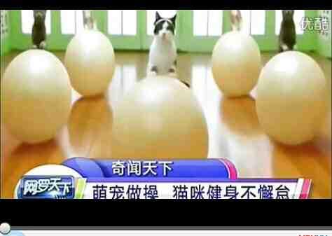 萌宠做操 猫咪健身不懈怠