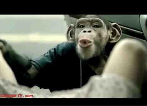 最棒的猩猩搞笑广告