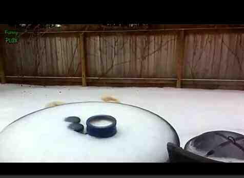 快乐冬天之动物溜冰打滑搞笑特辑