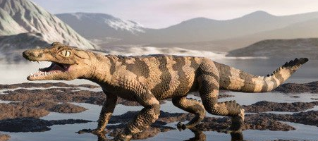 史前猪鳄凶猛吃恐龙 鼠鳄吞食猎物幼虫