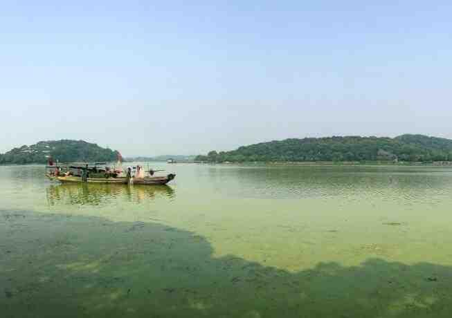 无锡气温升高太湖蓝藻泛滥 局部水域全覆盖