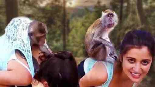 臭猴子 有本事别躲女人身上