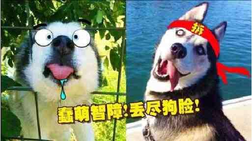 狗狗卡通头像 蠢萌
