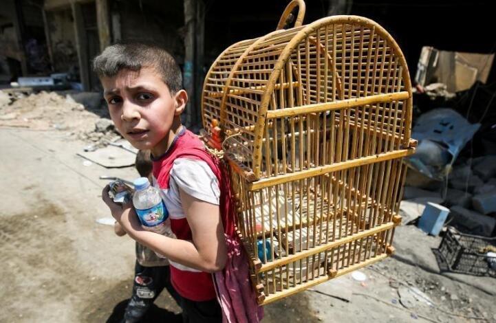 伊拉克军队进攻摩苏尔 男孩背鸟笼逃难