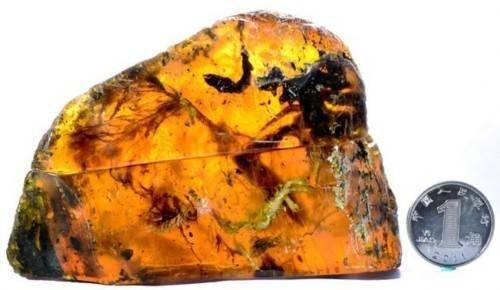 琥珀中发现古雏鸟 亿年雏鸟长相凶狠渗人