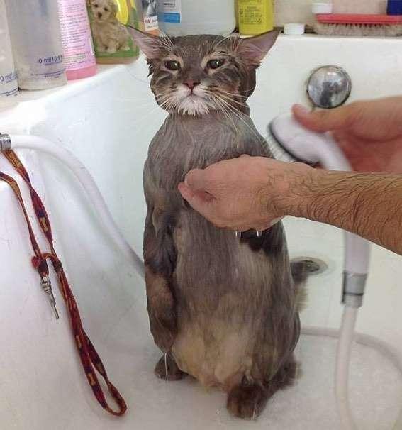 朕的入浴照,也不是随便的人都可以看得!
