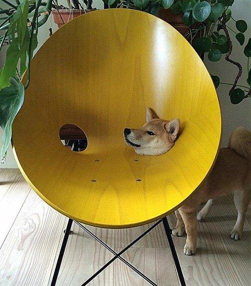 狗头露出来,让主人如何敢坐呢