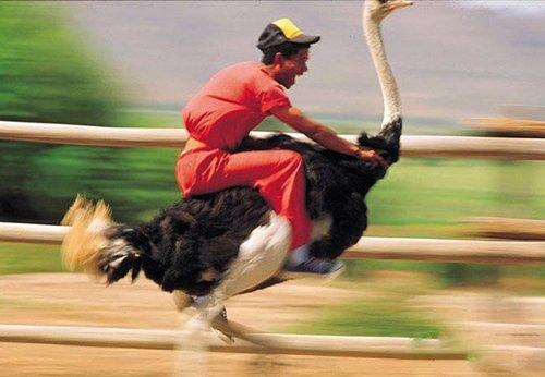 骑鸵鸟飞奔的人