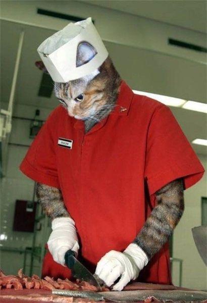 小猫版厨师切肉
