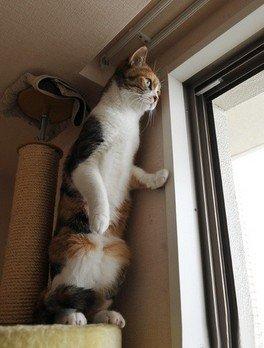 小猫站在高处瞭望窗外