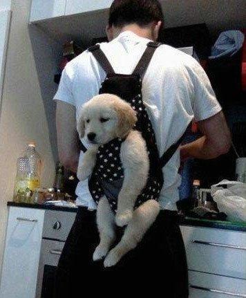 背着狗狗下厨房