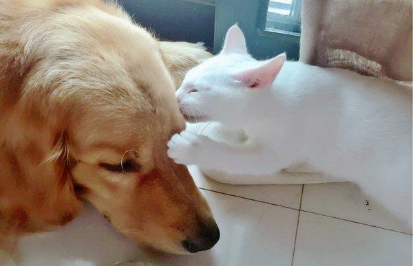 猫咪在狗狗头上亲一下