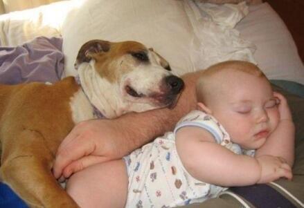 大人小孩和小狗爬在一起睡觉