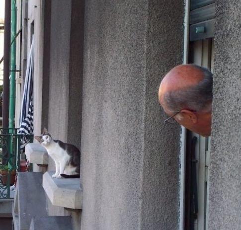 在阳台上相互观望