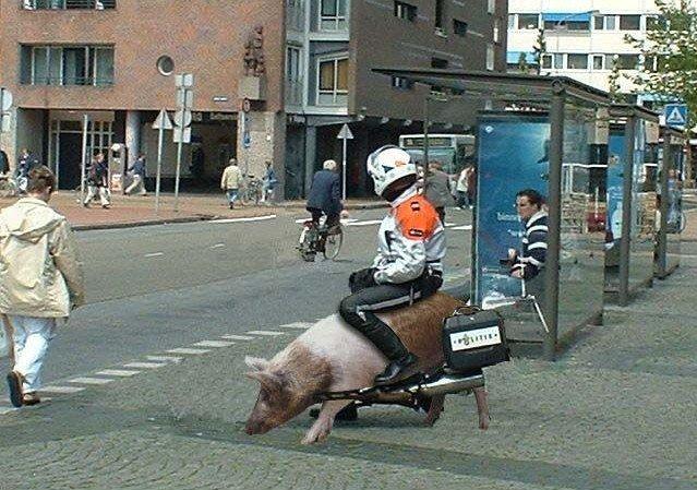 骑着猪街头巡逻