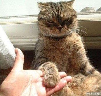 看你这么热情,本猫神就跟你握个手吧