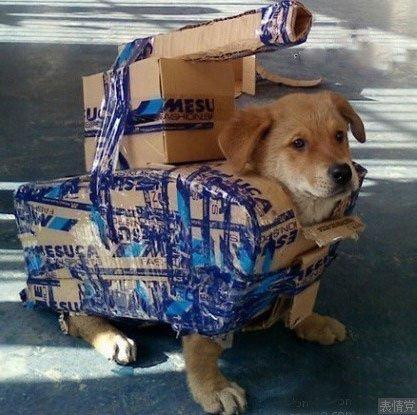 用狗狗做的小坦克