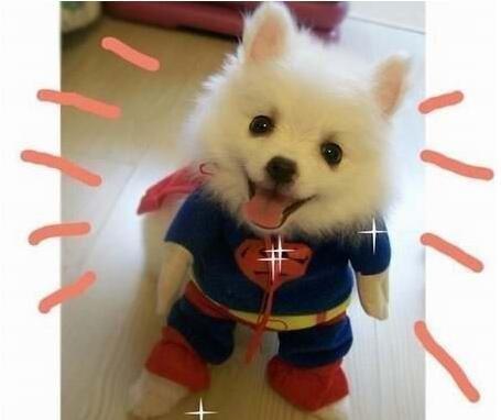 俺是一只超人狗