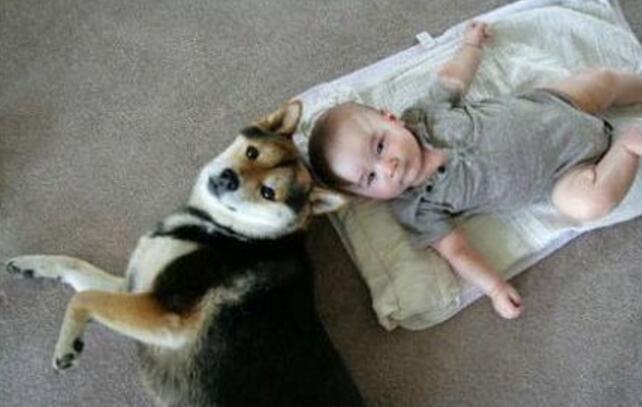 可爱宝宝和狗狗