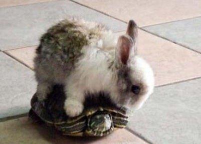 恶搞龟兔赛跑