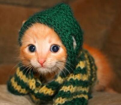 恶搞猫咪怪异的装束