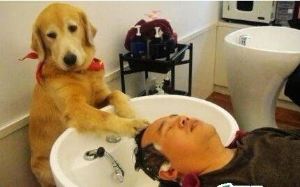 狗狗给客人洗头
