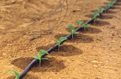 新疆:打造滴灌技术应用和产业集群高地