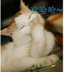 白猫捂着嘴巴偷笑