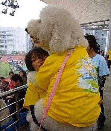 抱着超大狗一起来看球