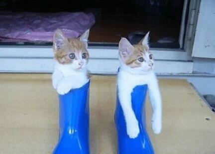 这两只小猫真会找地方玩