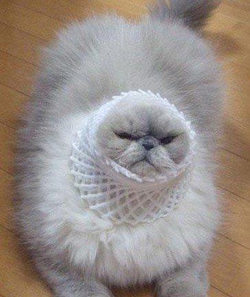 恶搞装扮猫咪的脑袋