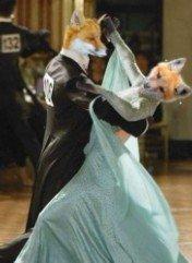 动物情侣玩跳舞