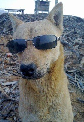 摆酷的狗大哥- 动物世界_赢家娱乐