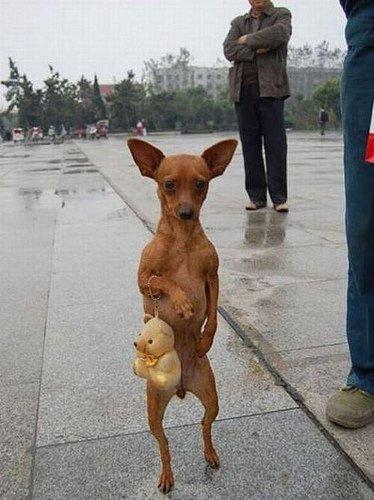 扮女人相逛街的小狗