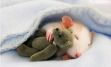 抱着布娃娃睡觉的小兔子