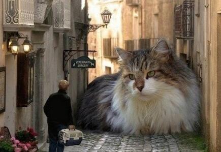 这只大猫真吓人