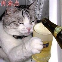 小猫也要喝啤酒