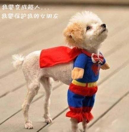 我要变成超人,我要保护我的女朋友