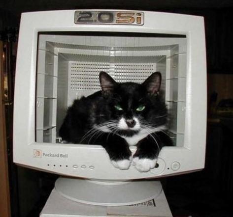 我是一只电脑猫