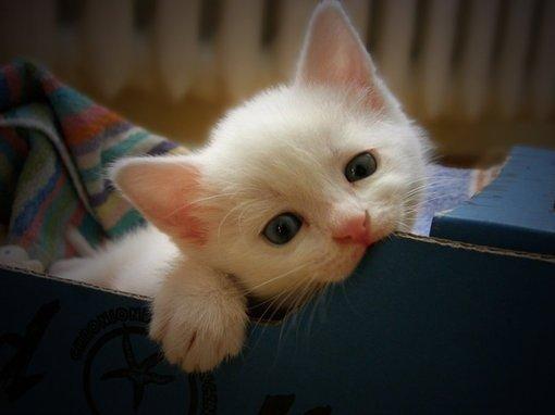 小猫咪失望的眼神