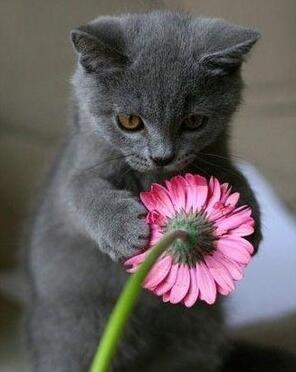 这是我的小花,谁也别抢