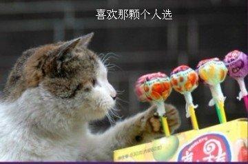 小猫犹豫的选糖吃